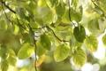Картинка зелень, листья, макро, радость, свежесть, природа, дерево