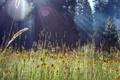 Картинка лес, трава, лучи, свет, цветы, природа, блики