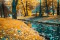Картинка лес, пейзаж, природа, парк