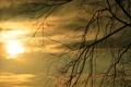 Картинка закат, облака, небо, солнце, силуэт, ветка, дерево