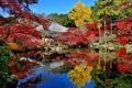 Картинка осень, листья, деревья, дом, пруд, отражение, Япония