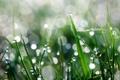Картинка трава, капли, макро, роса, блики
