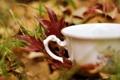 Картинка осень, трава, листья, макро, природа, чашка, белая