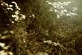 Картинка листья, иголки, ветки, растение, мох