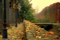 Картинка грусть, осень, листья