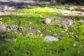 Картинка зелень, трава, макро, природа, камни, земля