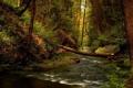 Картинка ручей, лес, деревья