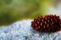 Картинка 2560x1600, nature, шишка, focus, cone, macro, природа