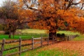 Картинка дорога, осень, листья, природа, colors, colorful, road