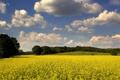 Картинка природа, осень, обои, деревья, поле