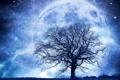 Картинка поле, звезды, ночь, сияние, дерево, планета