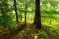 Картинка фото, Природа, Деревья, Лес