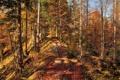 Картинка листья, лес, осень, гряда, деревья, небо