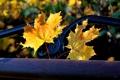 Картинка осень, листья, парк, лавочка