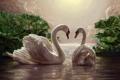 Картинка небо, птицы, романтика, пара, белые, живопись, лебеди