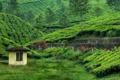 Картинка природа, чайная плантация, Western Ghats, southern India