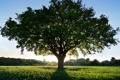 Картинка трава, ветки, солнце, природа, зелень, дерево