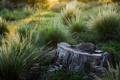 Картинка трава, природа, зелёная, пенёк, одинокий, Memories