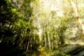 Картинка forest, Forestwalks, sunlight