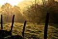 Картинка небо, трава, лучи, деревья, пейзаж, природа, колючая проволока