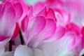 Картинка цветы, природа, лепестки