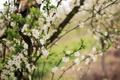 Картинка природа, весна, сад, деревья