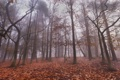 Картинка лес, листья, деревья, туман