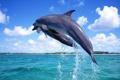 Картинка море, небо, облака, брызги, дельфины