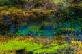 Картинка фото, Природа, Трава, Озеро