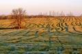 Картинка поле, осень, утро
