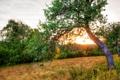 Картинка закат, природа, фото, дерево, рассвет