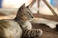 Картинка кошка, кот, серый, шерсть