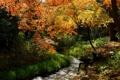 Картинка лес, трава, река, ручей, камни, солнечно