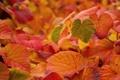 Картинка листья, осень, макро