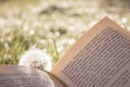 Картинка лето, трава, текст, одуванчик, книга