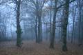 Картинка лес, осень, посадка, природа, дымка, листва