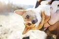 Картинка взгляд, настроение, собака, пёс