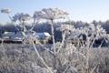 Картинка зима, иней, растения, winter, snow