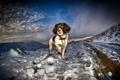 Картинка друг, зима, взгляд, собака