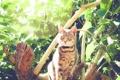Картинка глаза, кот, взгляд, листья, животное, растения, шерсть