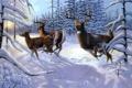 Картинка зима, лес, животные, солнце, лучи, снег, ель