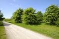 Картинка дорога, небо, трава, деревья, пейзаж