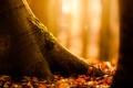 Картинка осень, природа, дерево, листва