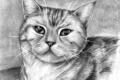 Картинка кошка, глаза, усы, животное, рисунок, шерсть, карандаш