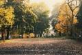 Картинка асфаль, осень, баскетбольные, кольца, деревья