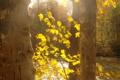 Картинка осень, листья, свет, деревья, природа, река