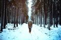 Картинка зима, дорога, лес, снег, деревья, мужчина, парень