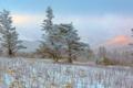 Картинка иней, поле, деревья, пейзаж