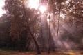 Картинка осень, лес, листья, солнце, лучи, свет, деревья