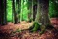 Картинка осень, лес, природа, мох